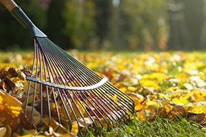 Tips for Avoiding Injuries While Raking Leaves