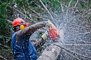 Staying Safe In Tree Removal Sites